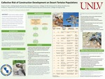 Collective Risk of Construction Development on Desert Tortoise Populations by Paulina Smith