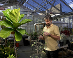 UNLV Herbarium